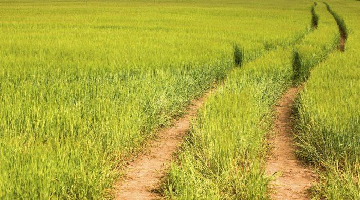 Crop Farm Trail Road Field Rye  - bixusas / Pixabay